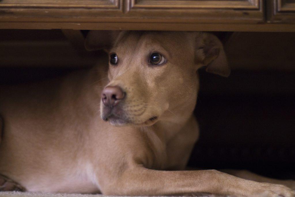 Foto: ängstlicher Hund, Quelle: shutterstock.com, Patrick H.