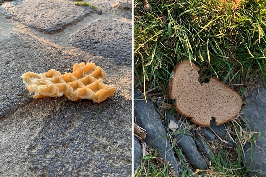 Abbildung: Waffeln und Brot bleiben nach Vogelfütterung liegen